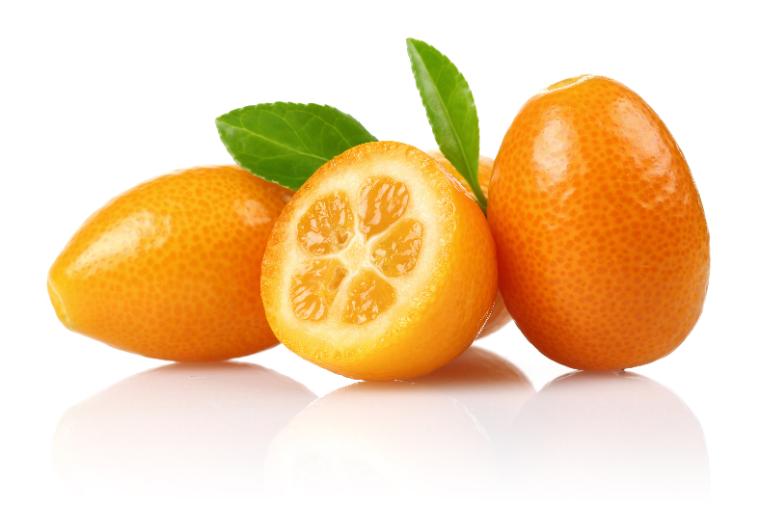 kumquat-top