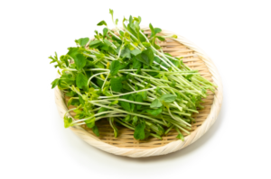 garden-pea-sprouts