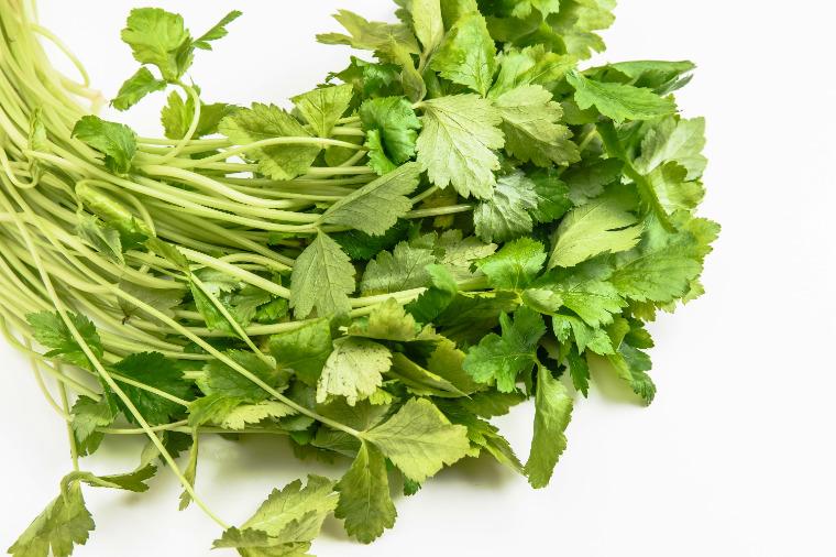 Japanese parsley